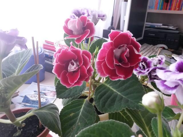 http://images.vfl.ru/ii/1496497668/6a49775b/17448378_m.jpg