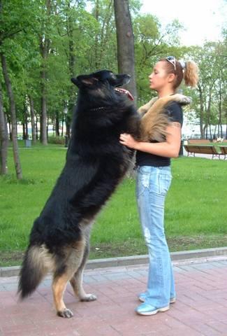http://images.vfl.ru/ii/1496567169/868c27e5/17456069_m.jpg