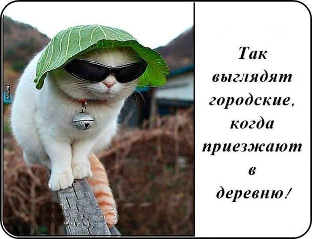 http://images.vfl.ru/ii/1496607210/05a344f6/17463832_m.jpg