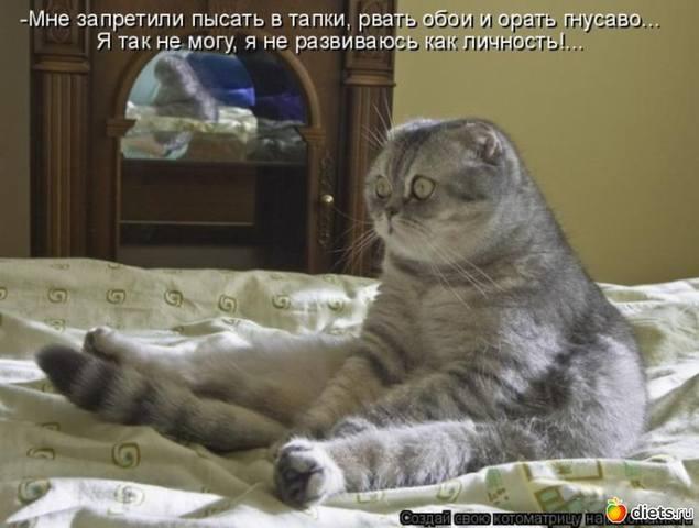 http://images.vfl.ru/ii/1496614344/465fb0f3/17464526_m.jpg
