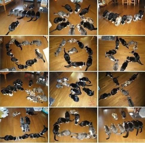 http://images.vfl.ru/ii/1496615390/1067788c/17464620_m.jpg