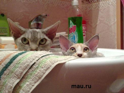 http://images.vfl.ru/ii/1496615391/3767c018/17464623_m.jpg
