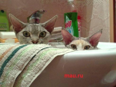 http://images.vfl.ru/ii/1496615391/3c7db01a/17464622_m.jpg