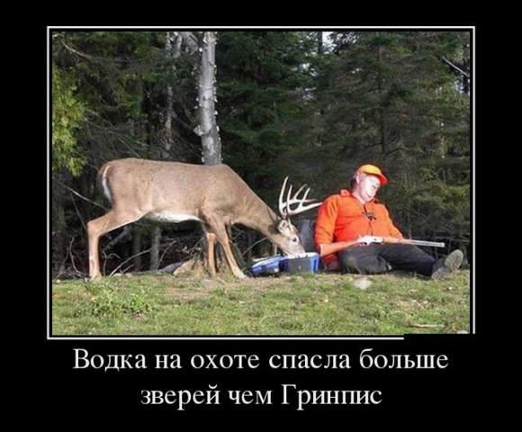http://images.vfl.ru/ii/1496777798/bf02daa1/17487769_m.jpg