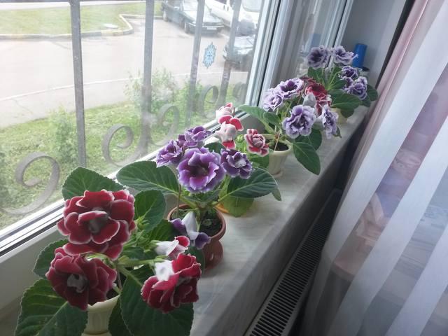 http://images.vfl.ru/ii/1496822828/2186777a/17491253_m.jpg