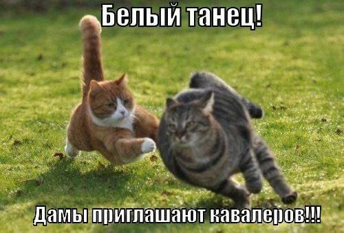 http://images.vfl.ru/ii/1497019747/525bfa75/17516886_m.jpg