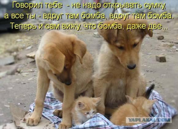 http://images.vfl.ru/ii/1497095155/5b239a3c/17524766_m.jpg