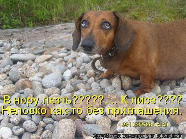 http://images.vfl.ru/ii/1497095193/7d007fa2/17524769_m.jpg