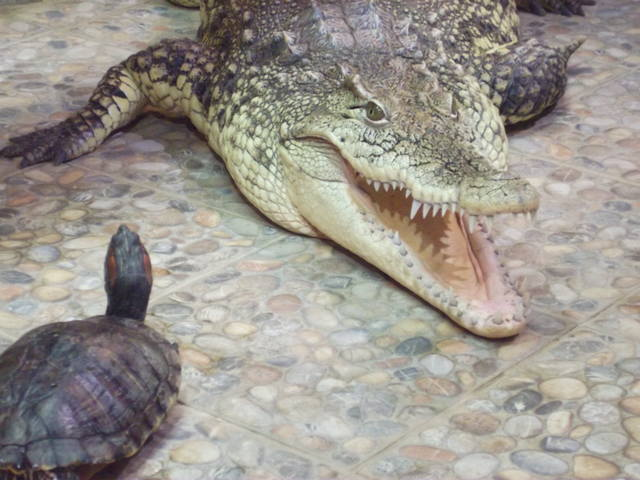 обувь со знаком крокодила
