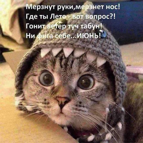 http://images.vfl.ru/ii/1497299327/ca3cfd03/17550279_m.jpg