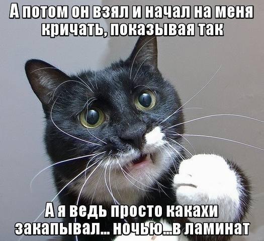 http://images.vfl.ru/ii/1497808201/d85c6a19/17623691_m.jpg