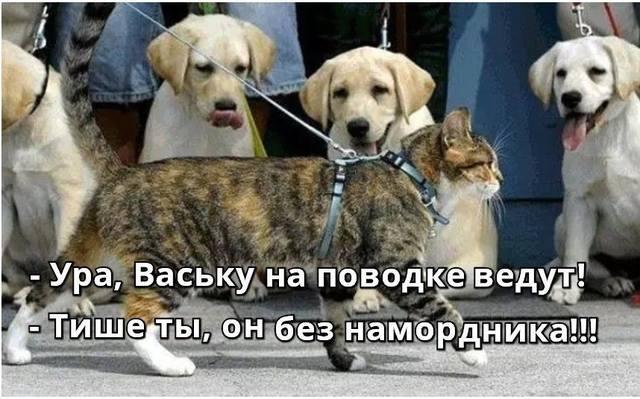 http://images.vfl.ru/ii/1497878779/4816de18/17632796_m.jpg