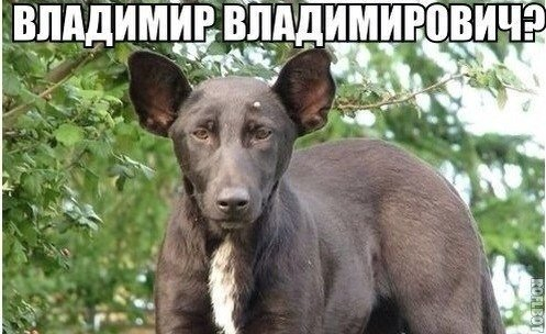 http://images.vfl.ru/ii/1497961876/f9847c16/17643975.jpg