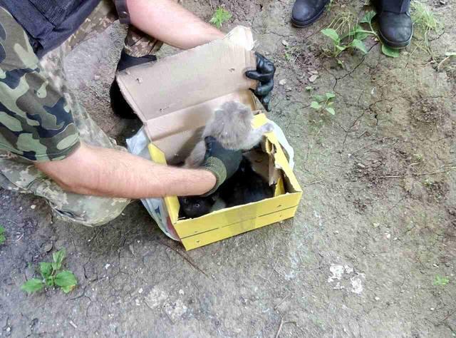 Котята в коробке переполошили взрывотехников и полицейских (ФОТО)