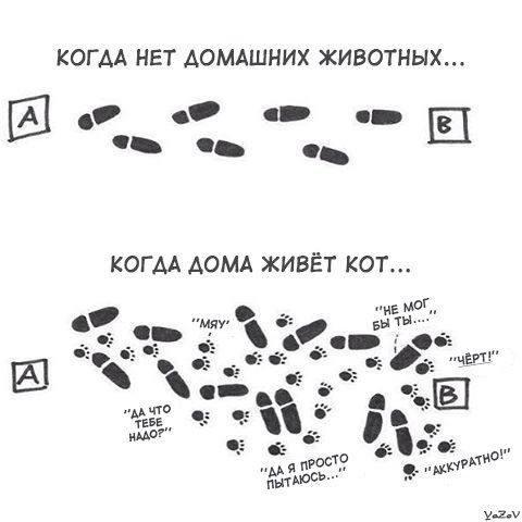 http://images.vfl.ru/ii/1498414728/a567f764/17710382_m.jpg