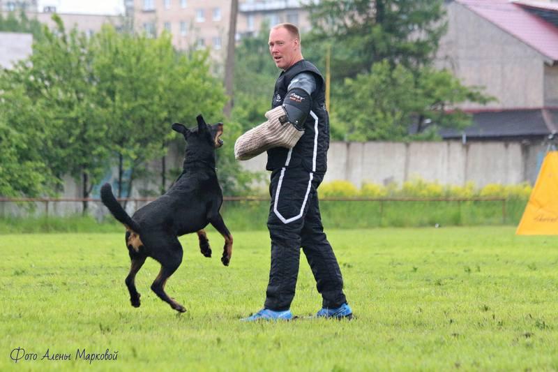 http://images.vfl.ru/ii/1498585986/47e1670f/17734074_m.jpg