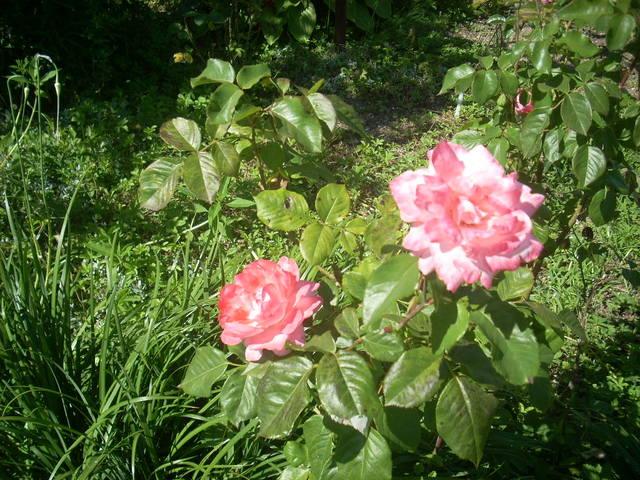 http://images.vfl.ru/ii/1498590099/5541820b/17734965_m.jpg