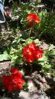 http://images.vfl.ru/ii/1499081314/f6cdbfd2/17799058_s.jpg