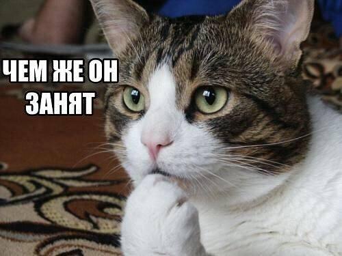 http://images.vfl.ru/ii/1499580267/31e2350c/17861913_m.jpg