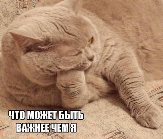 http://images.vfl.ru/ii/1499580399/b1bff42c/17861928_m.jpg