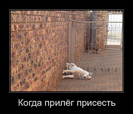 http://images.vfl.ru/ii/1499947910/b6b74362/17909500.jpg