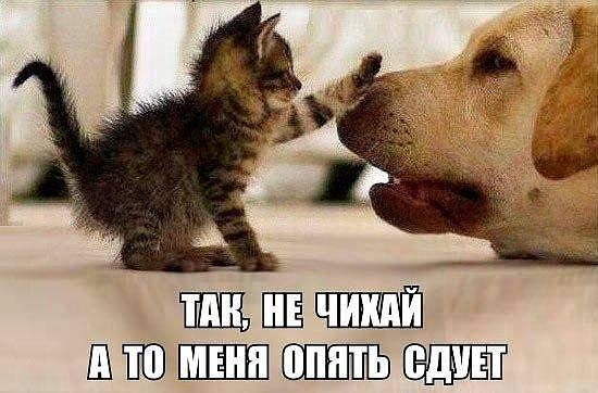 http://images.vfl.ru/ii/1500062075/f2b7c6dd/17925913_m.jpg