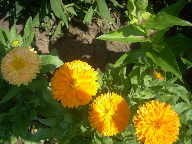 http://images.vfl.ru/ii/1500836130/55102ad7/18012289_m.jpg