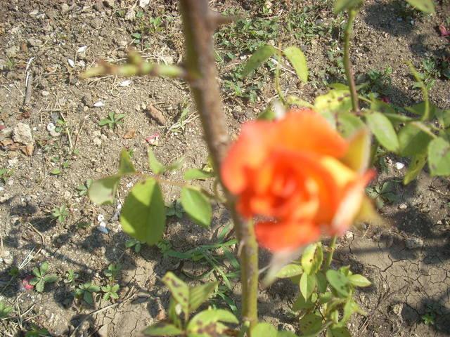 http://images.vfl.ru/ii/1500836289/b07e7ee3/18012314_m.jpg