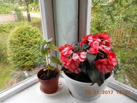 http://images.vfl.ru/ii/1500920254/78195990/18022645_s.jpg