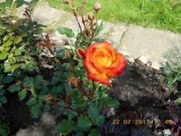 http://images.vfl.ru/ii/1500920426/a437fb7e/18022671_s.jpg