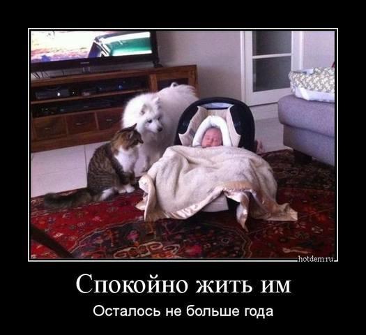 http://images.vfl.ru/ii/1501092317/4a4a0104/18043438.jpg