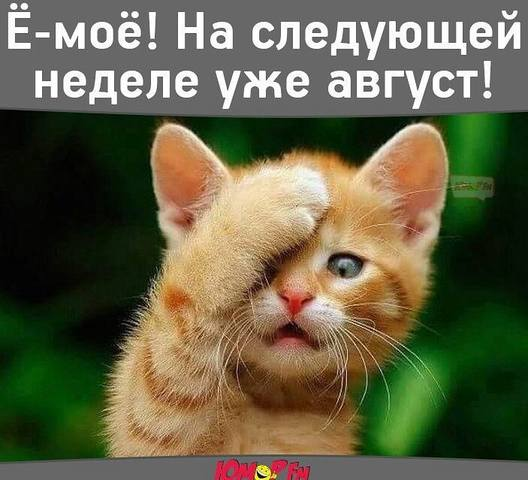http://images.vfl.ru/ii/1501251350/706e2f99/18063406_m.jpg
