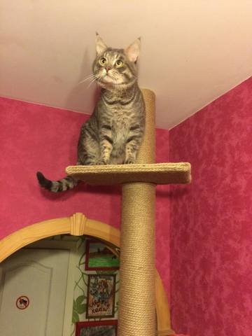 Для кошки на форуме