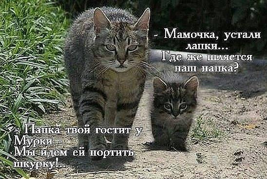 http://images.vfl.ru/ii/1501939198/3a1ad6b5/18147344_m.jpg