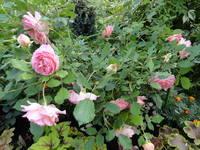 Розы цветут - Страница 4 18194045_s