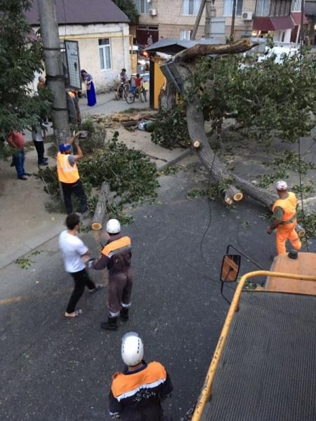 Бешеный ураган снес десятки деревьев и столбов в Дагестане | Изображение 1