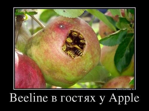http://images.vfl.ru/ii/1502378360/b47cb4e0/18204790_m.jpg