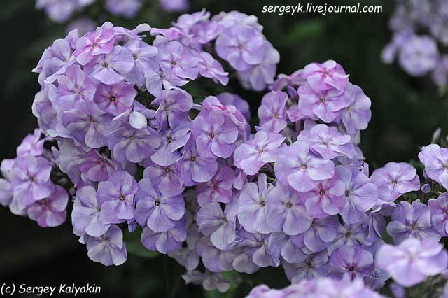 http://images.vfl.ru/ii/1503334164/17690ba7/18324195_m.jpg