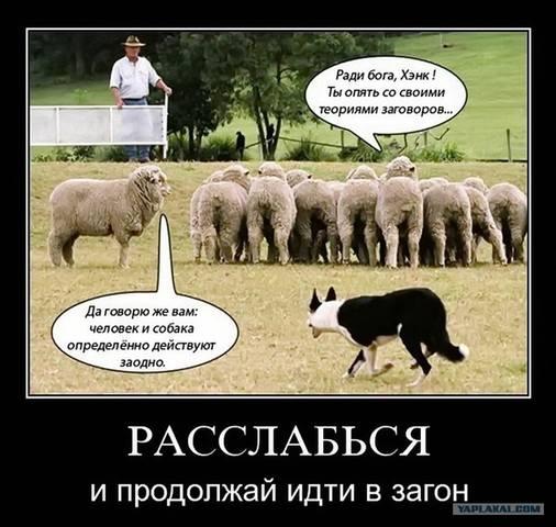 http://images.vfl.ru/ii/1503595218/2aa5454b/18360361_m.jpg
