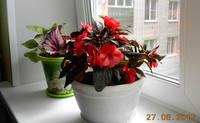 http://images.vfl.ru/ii/1504035683/c9130483/18415564_s.jpg
