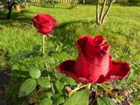 http://images.vfl.ru/ii/1504035891/082b95d9/18415592_s.jpg