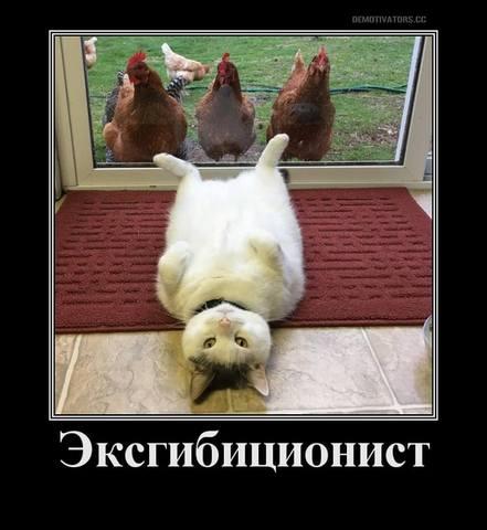 http://images.vfl.ru/ii/1504204129/823185a0/18437488_m.jpg