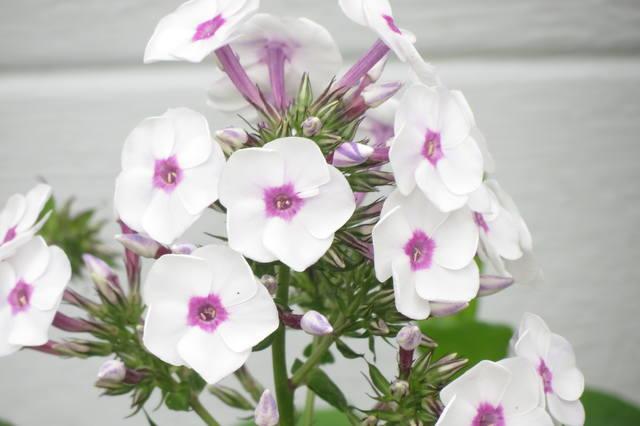 http://images.vfl.ru/ii/1504352286/20c05244/18455775_m.jpg