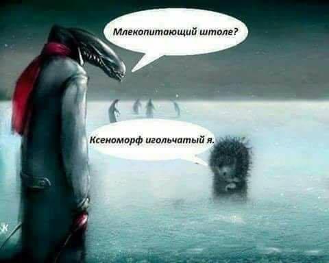 http://images.vfl.ru/ii/1504624786/a5f83436/18491180.jpg