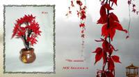 http://images.vfl.ru/ii/1504783273/4576cb3c/18512912_s.jpg