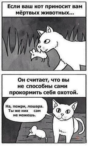 http://images.vfl.ru/ii/1505684223/5d42783c/18640056_m.jpg