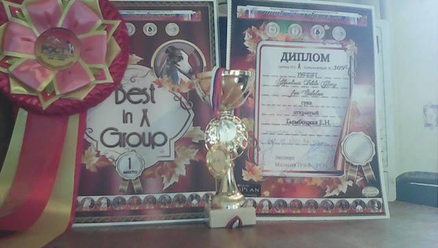 Уиппет Absoliuti Idile Glory for Edelen 18659791_m
