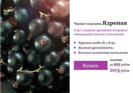 Сады России (sad-i-ogorod.ru). Скидка 20% на смородину