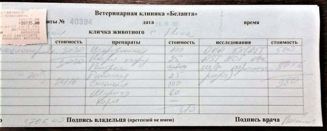 НИКА СБИТАЯ ДЕВОЧКА ПУДЕЛЬ!!! 18704172_m