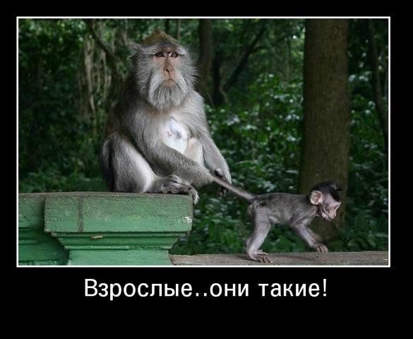 http://images.vfl.ru/ii/1506541850/b725f8f7/18771323_m.jpg
